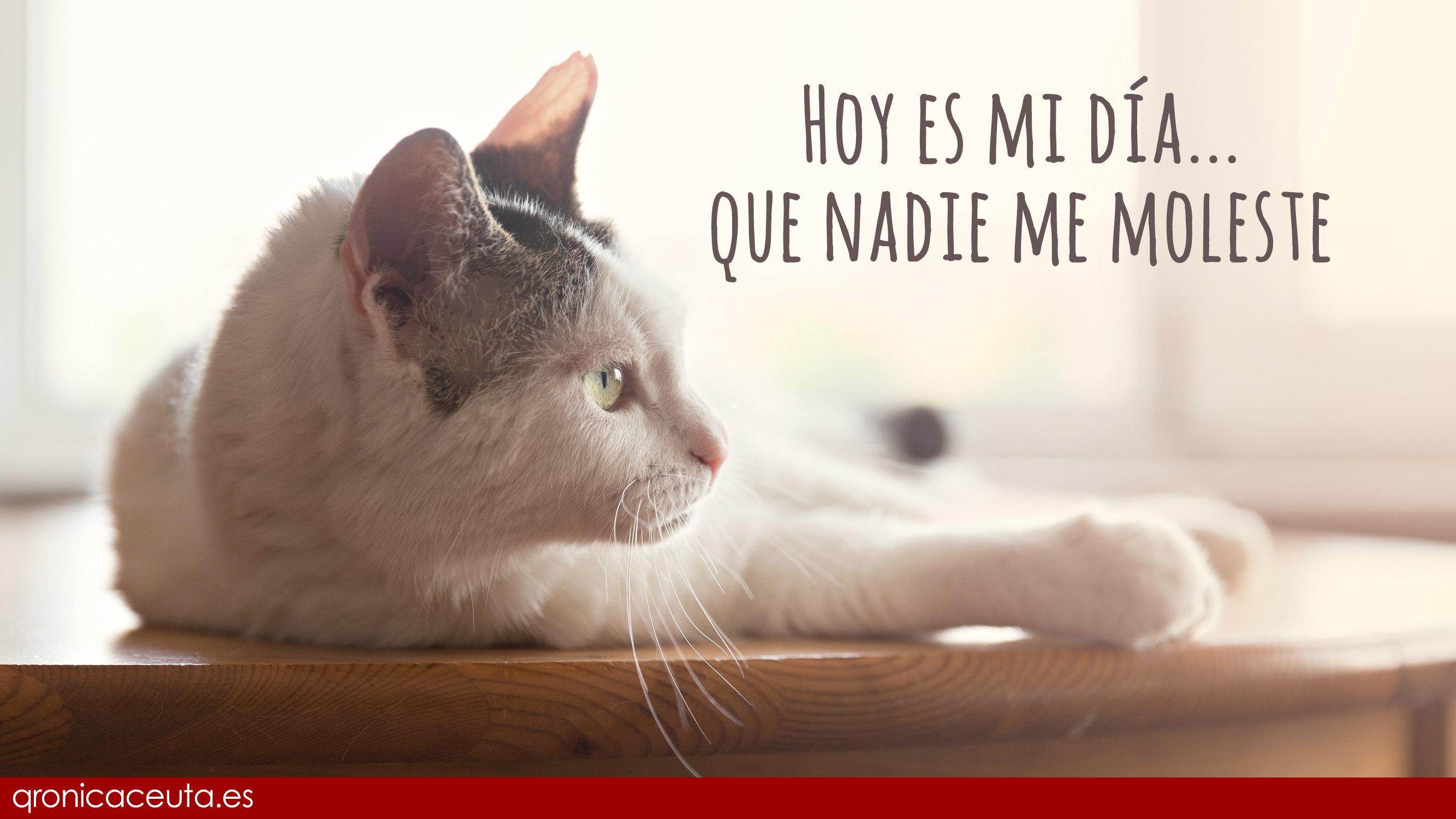 Resultado de imagen para Día Internacional del Gato